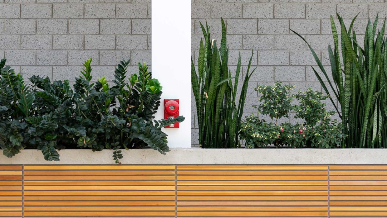 Urban Green Spaces: Window Sills to Rooftop Gardens